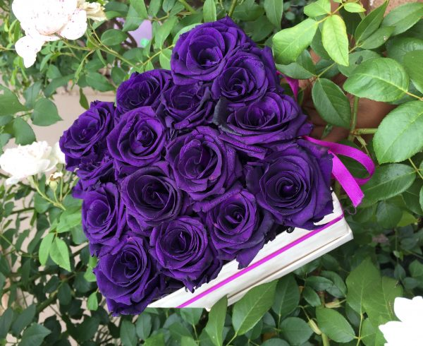 purple long life roses