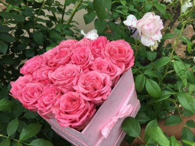 pink long life roses