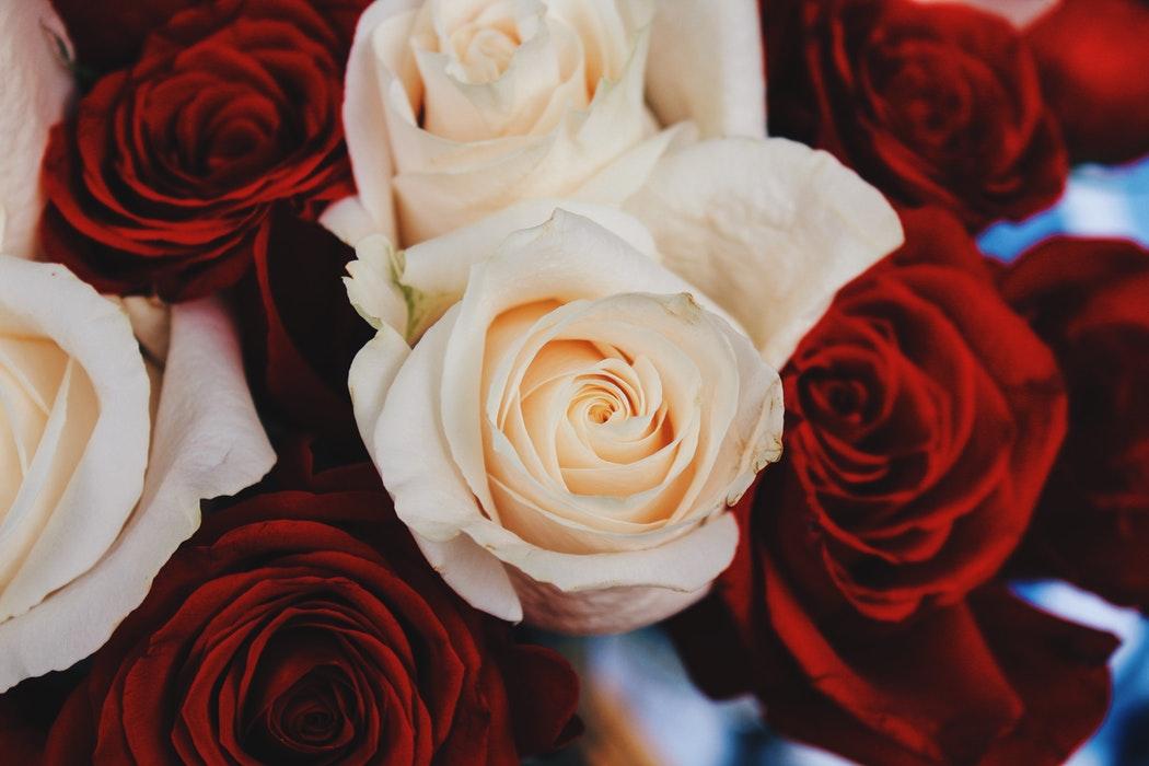 long lasting roses
