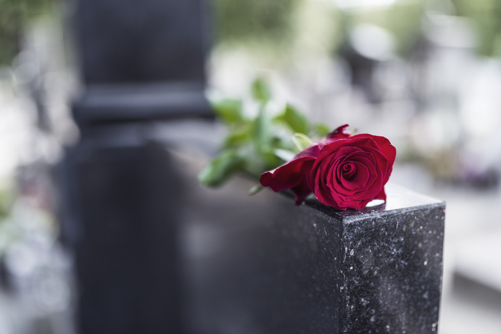 red rose for a tomb